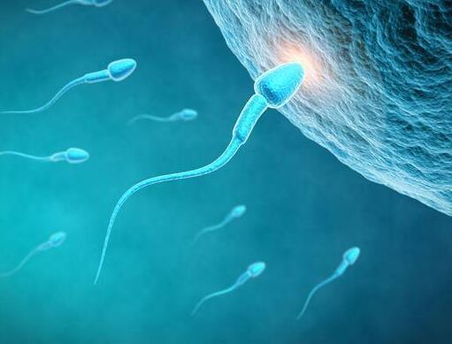男性精虫质量不佳,应该怎么补充营养